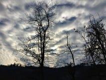 Небо, облака и деревья Стоковая Фотография