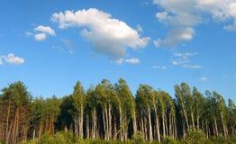 Небо, облака и лес Стоковые Фотографии RF