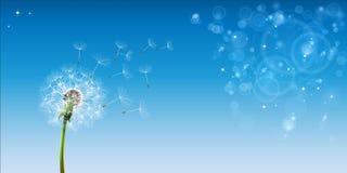 Небо одуванчика голубое иллюстрация штока