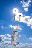 небо одуванчиков Стоковая Фотография
