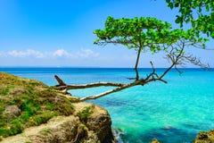 Небо океана ладони Стоковая Фотография RF