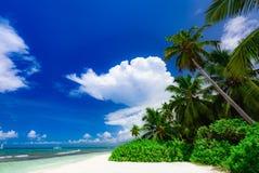 Небо океана ладони Стоковая Фотография