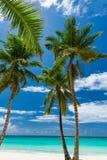 Небо океана ладони Стоковые Фото