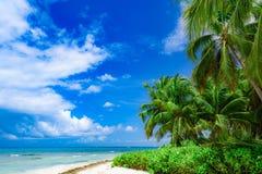 Небо океана ладони Стоковые Изображения RF