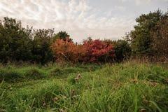 Небо осени весной в парке лета Стоковое Изображение RF
