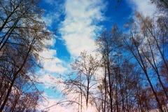 Небо осени в деревьях Стоковые Изображения