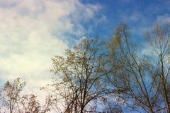 Небо осени в деревьях Стоковая Фотография RF