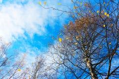 Небо осени в деревьях Стоковое фото RF
