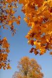 небо осени Стоковое фото RF