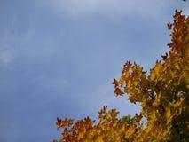 Небо осени Стоковое Фото