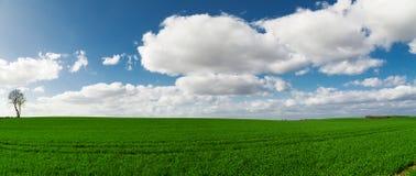 небо панорамы лужка травы облаков Стоковые Фотографии RF