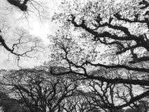 Небо под черными ветвями стоковое фото rf