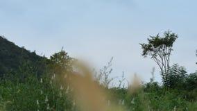 Небо получает темне сток-видео