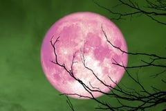 небо польностью розового дерева ветви силуэта задней части луны сухого красочное бесплатная иллюстрация