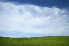 небо поля предпосылки Стоковая Фотография RF