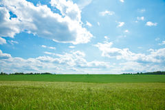 небо поля Стоковое фото RF