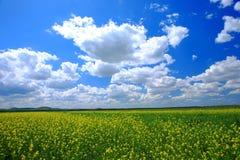 небо поля Стоковое Фото