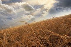 небо поля Стоковые Фото