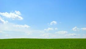 небо поля Стоковое Изображение