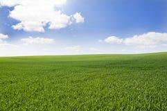 небо поля Стоковая Фотография RF