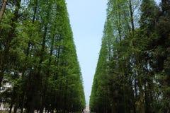 Небо под деревьями Стоковые Изображения