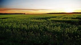 Небо поля и апельсина захода солнца желтое Стоковое Изображение RF