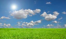 Небо поля риса голубые и солнечный. Стоковая Фотография
