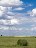 Небо пшеничного поля голубое Стоковая Фотография RF