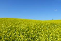 небо рапса ландшафта ясного поля идилличное Стоковые Изображения