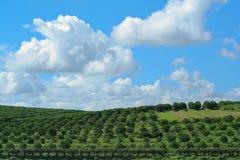небо сада фермы Стоковое Изображение RF