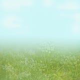 небо света цветка поля предпосылки голубое вниз Стоковые Фото