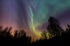 Небо северного сияния красочное над деревьями Стоковое Изображение RF