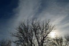 Небо силуэта дерева пасмурное бурное Стоковая Фотография