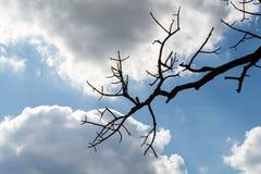 Небо, синь, облака, предпосылка, белизна, облако, красивое, природа, красота, цвет, лето, картина, свет, яркий, космос, день, env стоковое изображение