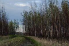 небо Сицилии дороги панорамы страны облаков сини воздуха открытое beautiful clouds ландшафт сельский стоковая фотография rf