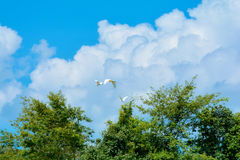 небо силуэта полета птиц птицы стоковое изображение