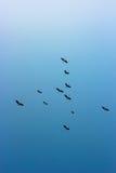 небо силуэта полета птиц птицы Стоковая Фотография RF