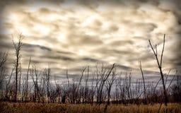 Небо снежка Стоковая Фотография