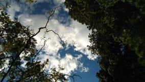небо снизу Стоковые Изображения