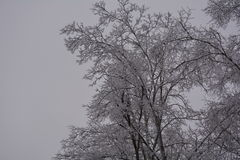 Небо сосулек деревьев снега зимы шторма льда холодное Стоковая Фотография RF