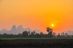 Небо Солнця установленное с зеленым рисом Стоковое Изображение RF