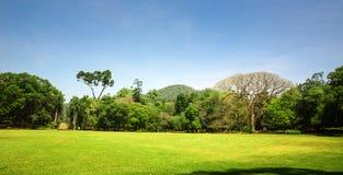 Небо сценарного anb природы голубое, Цейлон стоковая фотография rf