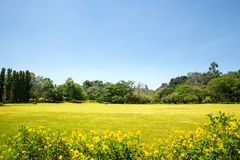 Небо сценарного anb природы голубое, Цейлон стоковое изображение rf