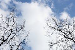 Небо с ветвями дерева Чувство одиночества и пустоты Стоковые Фотографии RF