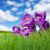 Небо травы ландшафта и фиолетовое fliower Стоковые Изображения RF