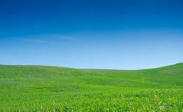 небо травы поля Стоковые Изображения