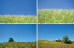 небо травы предпосылки голубое кристаллическое стоковые фотографии rf