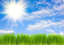 небо травы предпосылки голубое Стоковые Фото