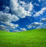 небо травы предпосылки Стоковые Фото