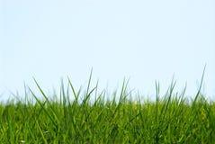 небо травы предпосылки Стоковые Изображения RF